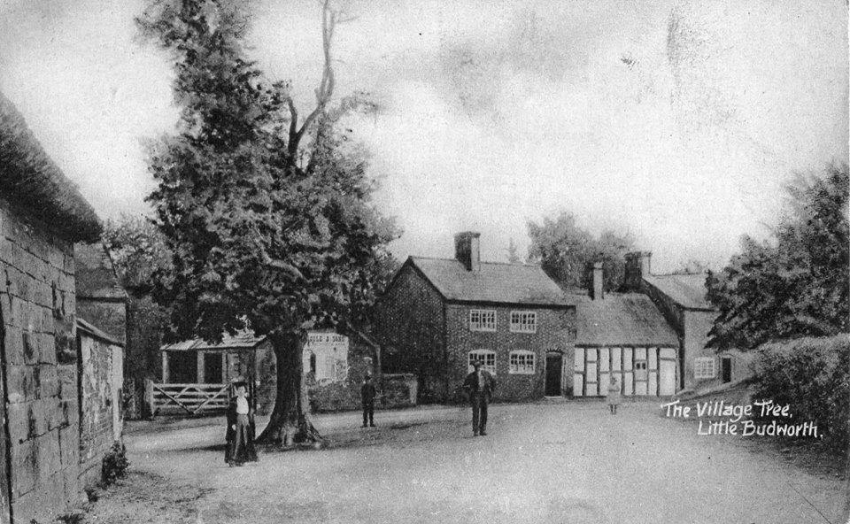 village tree 1920s