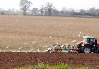17th January – Plough Sunday